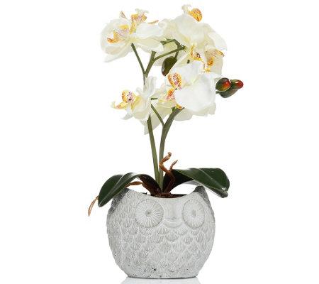lumida flora leuchtende blumen orchidee im topf eulen