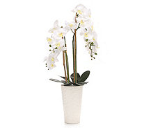 LUMIDA Orchidee leuchtend - 776831
