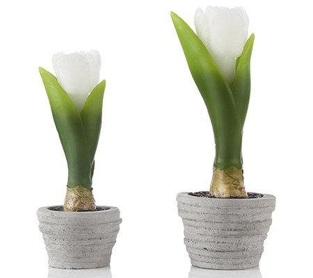 elambia flammenlose tulpen kerzen im topf timer 2tlg. Black Bedroom Furniture Sets. Home Design Ideas