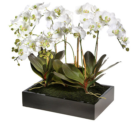 kunstblume orchidee phalaenopsis mit weissen bl ten im topf page 1. Black Bedroom Furniture Sets. Home Design Ideas