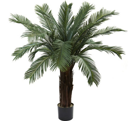 4' Cycas Tree by Nearly Natural