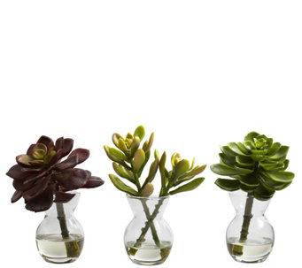 Set of 3 Succulent Arrangements by Nearly Natural - H290602