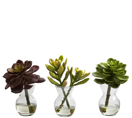 Set of 3 Succulent Arrangements by Nearly Natural