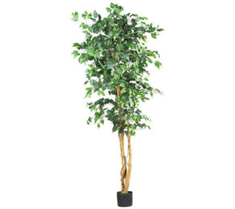 6' Ficus Tree by Nearly Natural - H162304