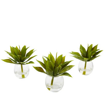 Set of 3 Agave Succulents with Vases by NearlyNatural - H290604