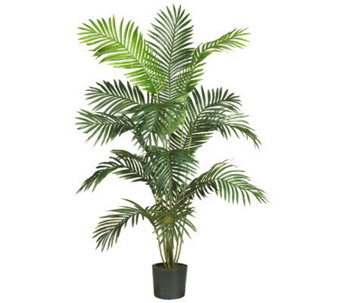 6' Paradise Palm Tree by Nearly Natural - H162308