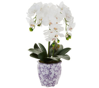 "22"" Orchid in Ceramic Pot by Valerie - H210614"