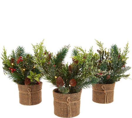 Scott Living Set of 3 Mini Christmas Greens in Burlap Pots