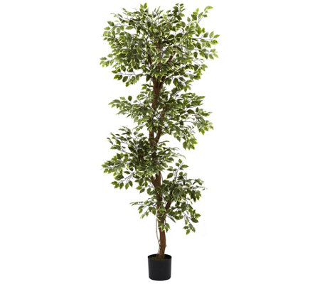 6' Variegated Ficus Silk Tree by Nearly Natural