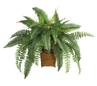 Boston Fern Plant with Wicker Basket by NearlyNatural - H162320