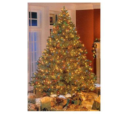 Roman Bethlehem Pre-Lit Douglas Fir Christmas Tree — QVC.com
