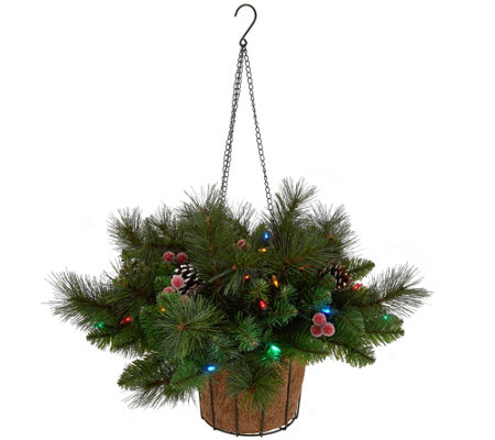 Bethlehem Lights Canterbury Hanging Basket with Pinecones