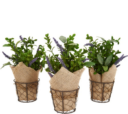 """As Is"" Set of (3) 11"" Potted Herbs with Burlap by Valerie"