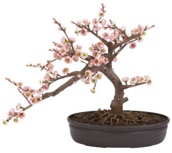 Cherry Blossom Bonsai Tree by Nearly Natural - H357340