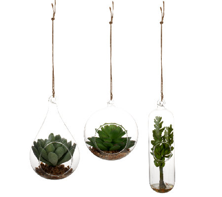 ED On Air Set of 3 Hanging Glass Succulents by Ellen DeGeneres