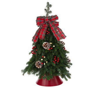 Fresh Balsam Tabletop Tree by Valerie Del Week 11/21 - H280943