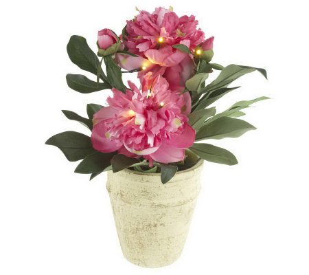 "BethlehemLights BatteryOperated 13"" Potted Peonies with Timer"