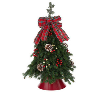 Fresh Balsam Tabletop Tree by Valerie Del Week 11/28 - H280945