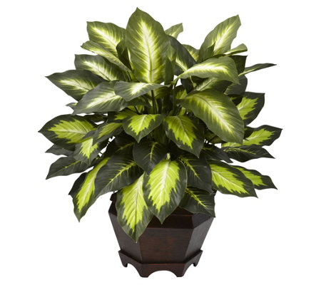 Triple Golden Dieffenbachia w/Wooden Vase by Nearly Natural
