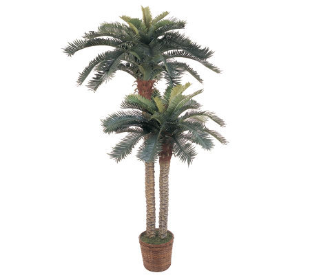 6' & 4' Sago Palm Double Potted Tree by NearlyNatural
