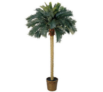 6' Sago Palm Tree by Nearly Natural - H179254