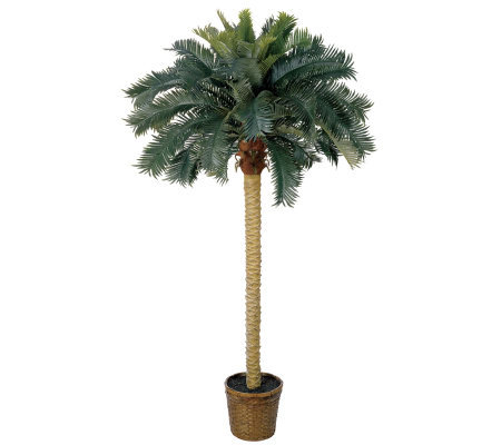 6' Sago Palm Tree by Nearly Natural