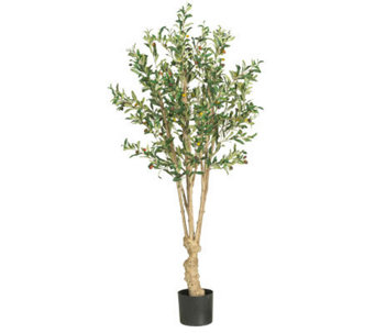 5' Olive Tree by Nearly Natural - H357358