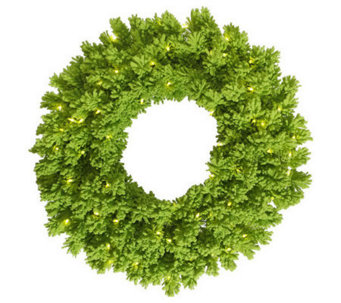 "24"" Colored Slim Pine Wreath by Vickerman - H280559"