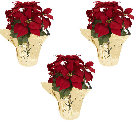 "Set of 3 18"" Poinsettia Plants by Valerie"