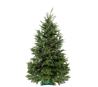 Del Week 11/14 Carolina Fraser Fresh Cut 6.5-7'Fraser Fir Tree - H364160