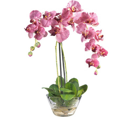 "18"" Phalaenopsis in Glass Vase by Nearly Natural"