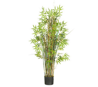 5' Grass Plant Bamboo by Nearly Natural - H357368