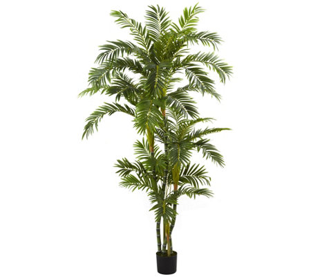 6' Curvy Parlor Palm Silk Tree by Nearly Natural