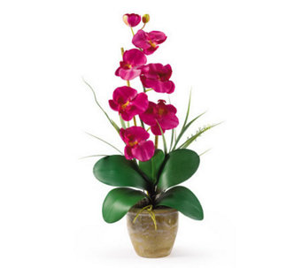 Phalaenopsis Orchid Flower Arrangement byNearlyNatural - H162374