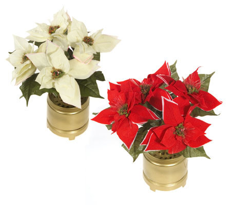 Fiber optic poinsettia arrangement with pot for Poinsettia arrangements