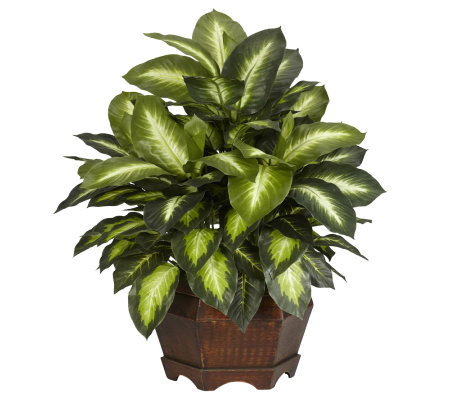 Golden Dieffenbachia Plant by Nearly Natural
