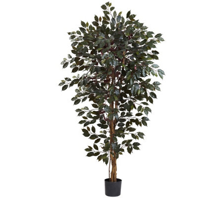 6' Capensia Ficus Tree by Nearly Natural