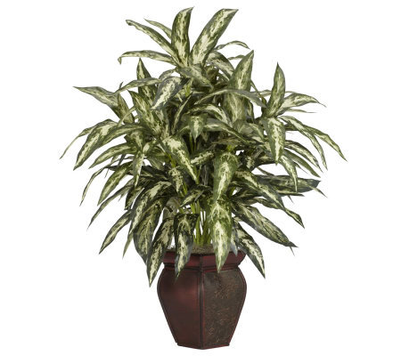 Aglaonema with Decorative Vase Plant by NearlyNatural