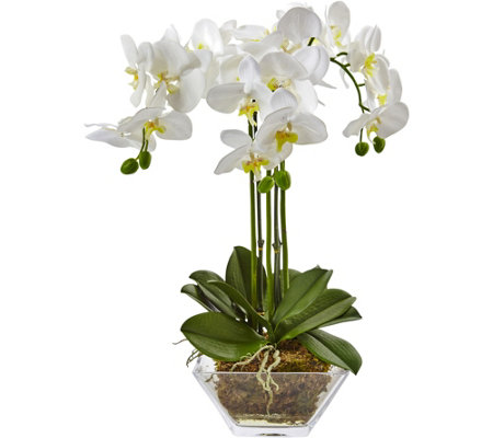 Triple Phalaenopsis Orchid in Glass Vase by Nearly Natural