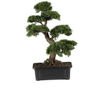 "Cedar Bonsai 24"" Plant by Nearly Natural - H179290"