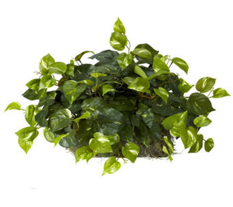 Pothos Ledge Plant by Nearly Natural - H357390
