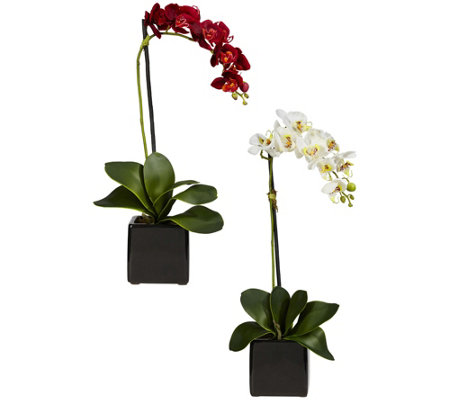 Set of 2 Phaleanopsis Orchids with Vase by Nearly Natural
