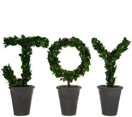 "Scott Living 3-Piece 14"" Lit Preserved Boxwood ""JOY"" Topiaries"
