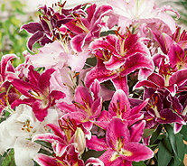 Roberta's 16-Piece Fragrant Oriental Lily Mix - H285696