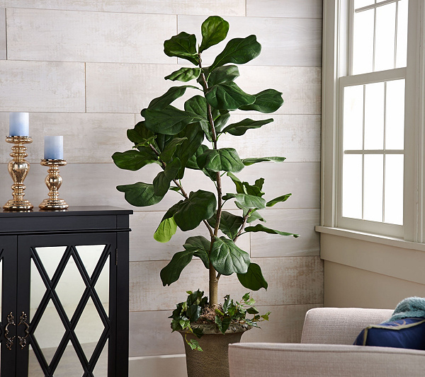 5 potted fiddle leaf tree in pot by valerie page 1 qvccom - Fiddle Leaf Fig Tree