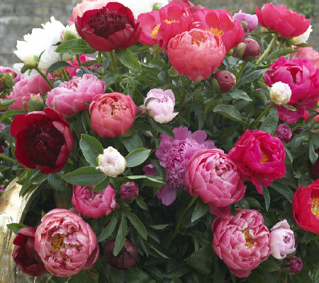 Roberta's 3-pc. Bounty of Blooms Victorian Peony Collection