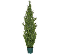"National Tree 65"" Faux Cedar Tree with Growers Pot - M55952"