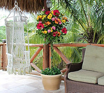 Cottage Farms Key West Sunset Braided Hibiscus Patio Tree - M46272