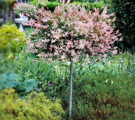 Cottage Farms Flamingo Willow Patio Tree