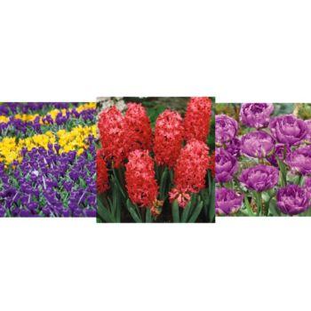 Roberta's 195-piece Glorious Spring Garden Collection